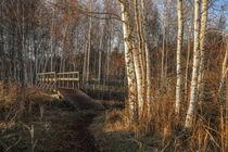 Holzbrücke im NSG Pfrunger-Burgweiler-Ried von Christine Horn