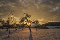 Winterlandschaft im Hegau mit Obstbäumen im Gegenlicht von Christine Horn