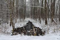 Winterlandschaft mit Wassergraben im NSG Heudorfer Ried - Landkreis Konstanz by Christine Horn