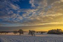 Winterliche Hegaulandschaft mit Streuobstbäumen im Abendlicht von Christine Horn