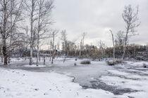 Winter im NSG Pfrunger-Burgweiler Ried mit Birken und Totholz von Christine Horn