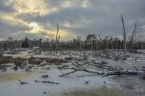 Winterliche Moorlandschaft mit Hütte und Totholz im NSG Pfrunger-Burgweiler Ried von Christine Horn