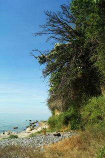 Bäume am Steilufer von Klein Zicker von Sabine Radtke