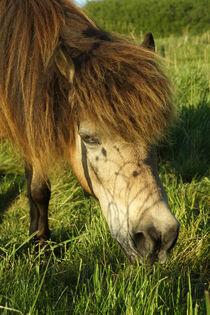 Hellbraunes Pferd mit üppigem Pony von Sabine Radtke