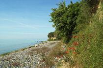 Mohnblumen am Steilufer von Klein Zicker auf Rügen von Sabine Radtke