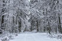 Verschneiter Winterwald bei Burg Wildenstein - Naturpark Obere Donau by Christine Horn