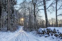 Waldweg mit tiefstehender Sonne bei Burg Wildenstein - Naturpark Obere Donau by Christine Horn