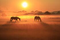 2 Pferde und ein Graureiher von Bernhard Kaiser