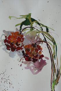 Zwei Blüten von Sonja Jannichsen