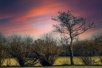 Springtime von Michael Naegele