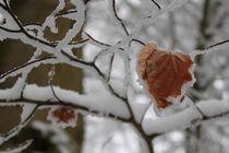 Buntes Blatt im Winter von mario-s