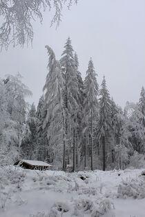Winterzauberwald von mario-s