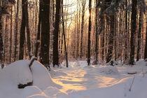 Winterwald bei Sonnenuntergang von mario-s