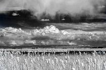 Monte Vista Marsh von Barbara Magnuson & Larry Kimball