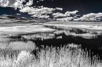 Refuge Wetland by Barbara Magnuson & Larry Kimball