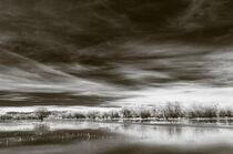 Wetland von Barbara Magnuson & Larry Kimball