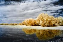 Bosque Wetland von Barbara Magnuson & Larry Kimball
