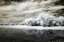New Mexico Wetland by Barbara Magnuson & Larry Kimball
