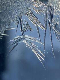Close up iceroses  by Mona Limbodal