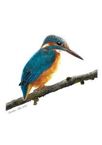Kingfisher watercolour painting von Caroline Allen