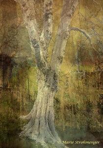 Silberbaum von Marie Luise Strohmenger