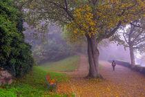 Herbstmorgen Freiburg Schlossberg von Patrick Lohmüller