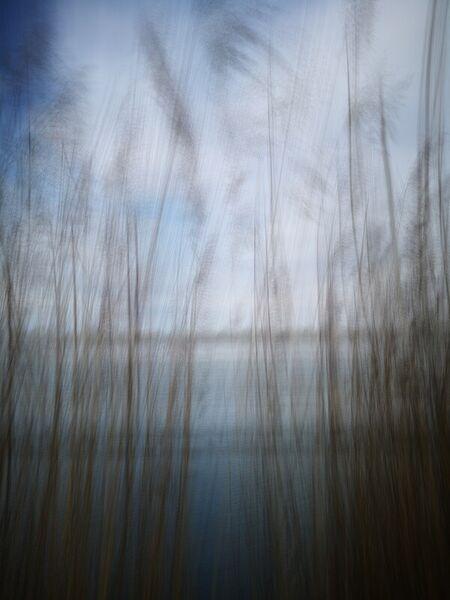 Natur-abstract-irynamathes-2