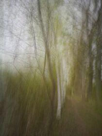 Frühling im Wald. Abstrakt by Iryna Mathes