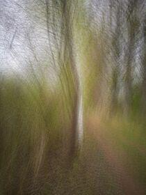 Frühling im Wald. Abstrakt. von Iryna Mathes