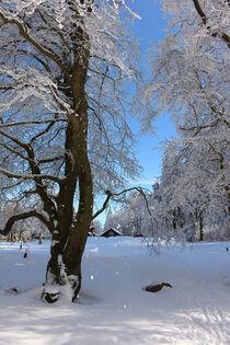 Winterlandschaft by mario-s