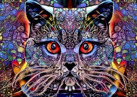 Mulicolour-cat-a2