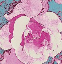 Pink Rose on a Teal Background von eloiseart