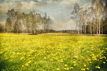 Springtime in the Moor by Edmund Nagele F.R.P.S.