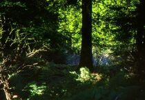 Waldleuchten von Ulrike Ilse Brück