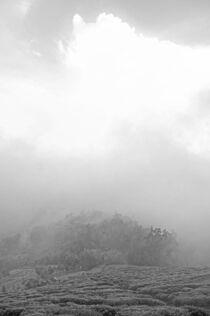Cloud covered tea farm India  by Nayan Sthankiya