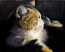 Katzenportrait - Bonney von Ulla Schönhense