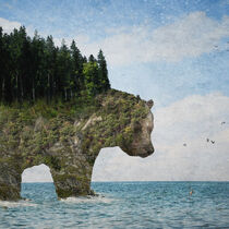 Ursidora: The Invisible Bear Island von Paula  Belle Flores