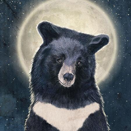 Moon-bear-portrait-s