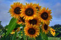 Sonnenblumen von Edgar Schermaul
