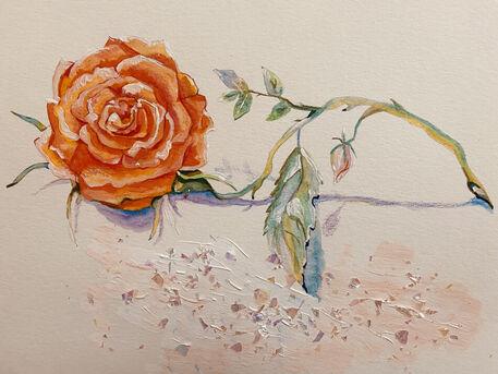 Orangerose-final