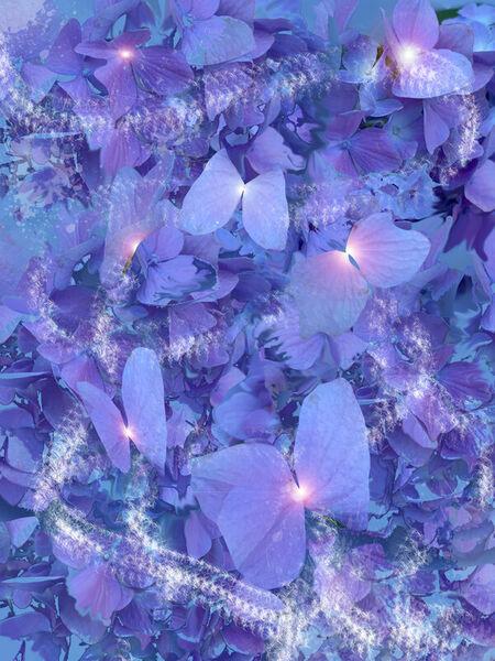 Bluebutterflies-scale100