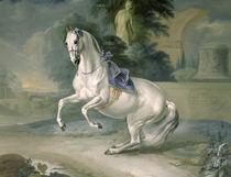 The White Stallion 'Leal' en levade von J.G. Hamilton
