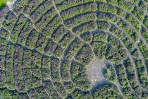 Detail Lavendel-Labyrinth im Park der Universität Hohenheim  von Christoph Hermann