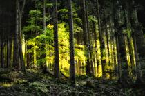 Schwarzwaldleuchten I - Lichterspiel in Gelb und Grün by matthias-edition