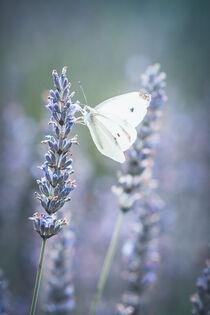 Blühender Lavendel und Schmetterling von Iryna Mathes