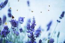 Lavendel von Heidi Bollich