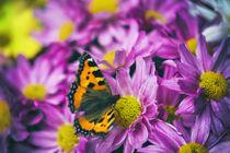 Schmetterling in Blüten von Heidi Bollich