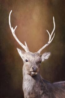 Junger Hirsch von Heidi Bollich