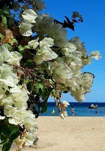 Summer Dreams II von Juergen Seidt