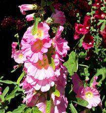 Summer Flowers II von Juergen Seidt